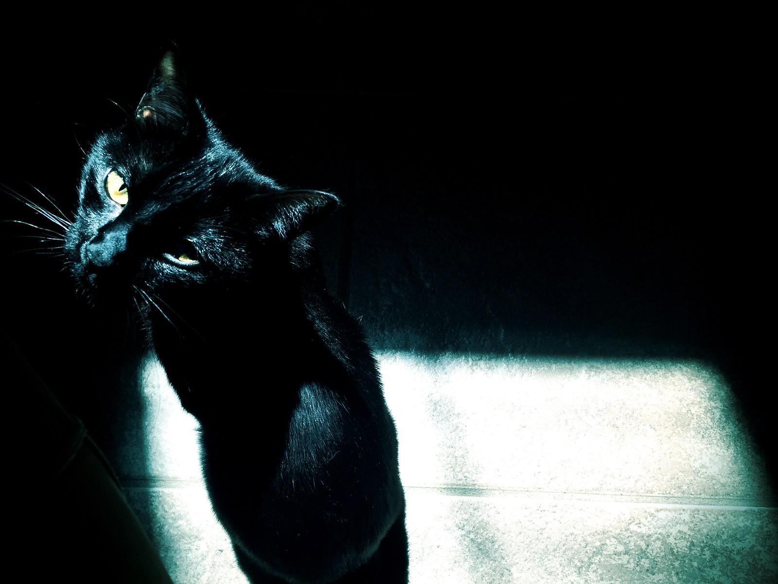 Kitty Noire