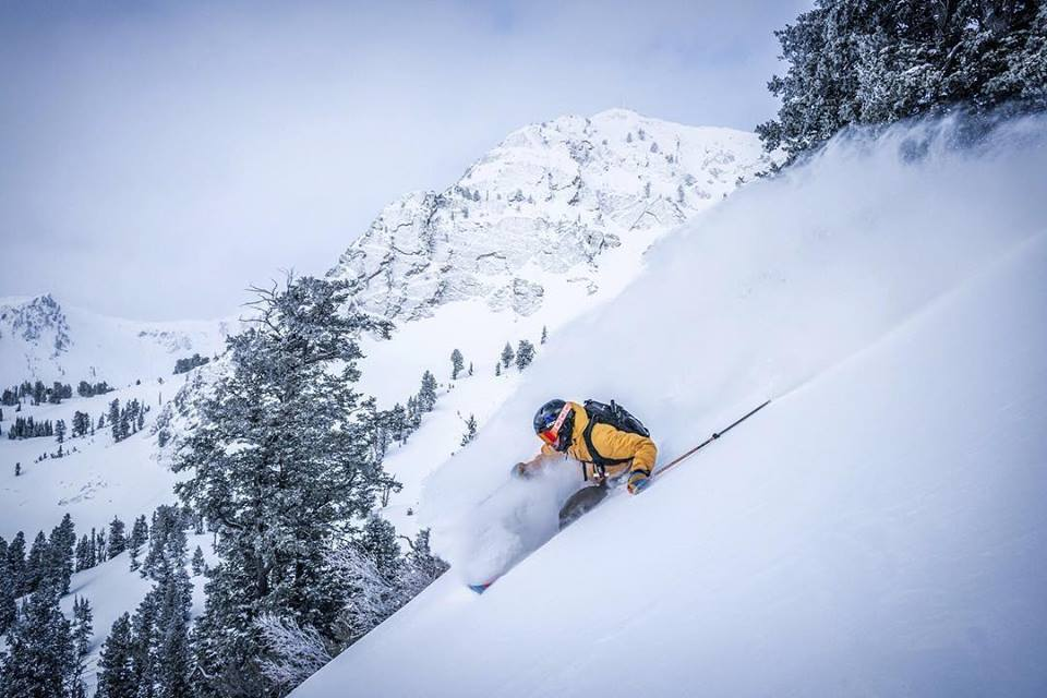 Snowbasin powder hound