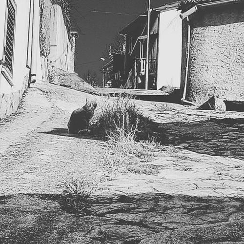 La timida #Aria vi augura #buonadomenica #antique #b&w #vintage  #catscape #cats #catsofinstagram #catlovers #surrealcats42 #caturday #Calabria #italy #monochrome
