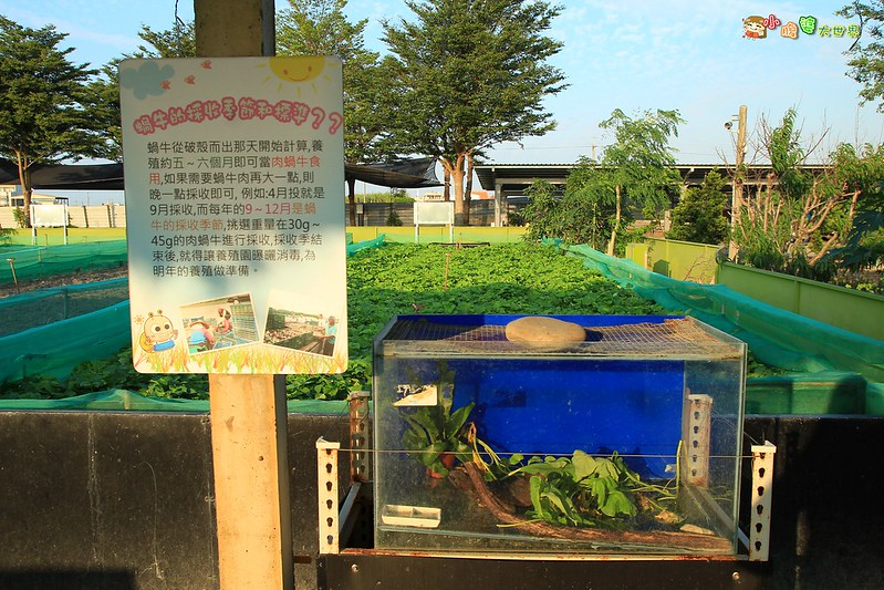 小品蝸牛觀光農場一021