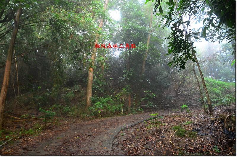粗坑森林三角點位置