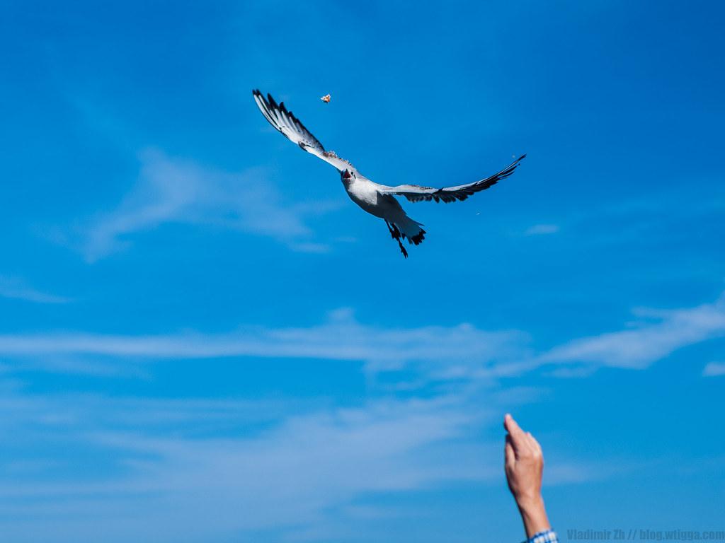 Лучший кадр с чайкой за время поездки