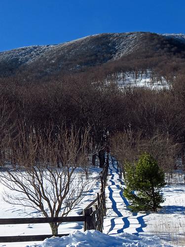 snow landscape northcarolina westernnorthcarolina southernappalachians elkknobstatepark canonpowershotsx40hs