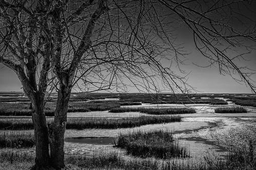 bw blackwhite blackandwhite branches coastal estuary grass lowtide marsh marshland monochrome oquinnestuary saltmarsh seagrass tree water wetlands hitchcock texas unitedstates us tidal