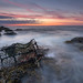 'Lobster Pink' - Anglesey by Kristofer Williams