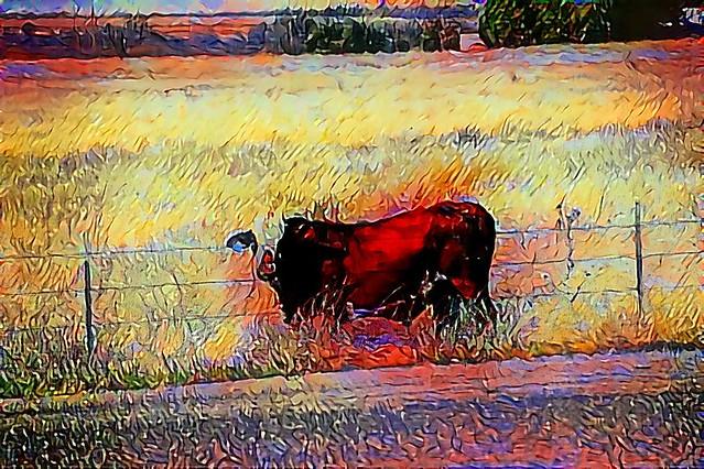 cow 6