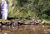 Bowden Falls - Jamaica