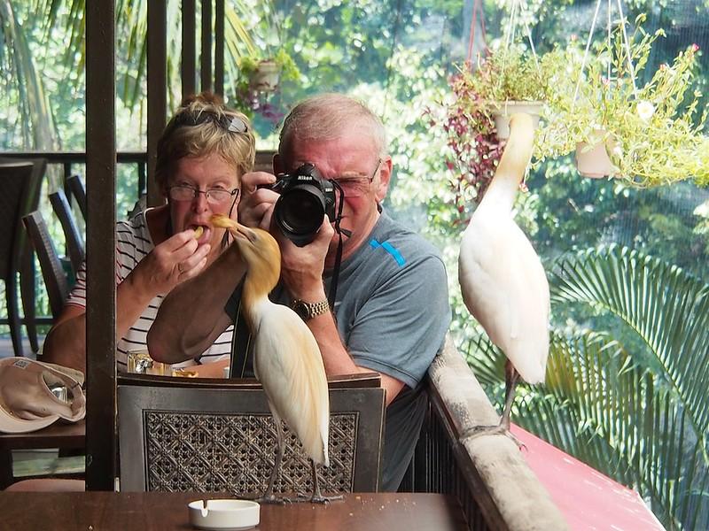 People & Birds #1
