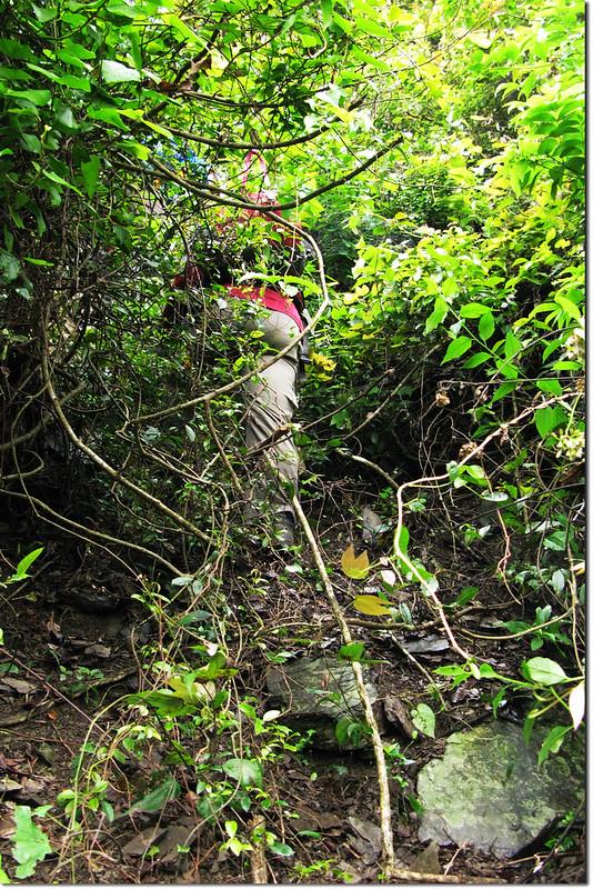 攀登垂直岩壁區 1