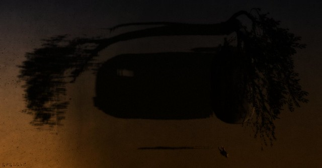 4. the carvan at furiller