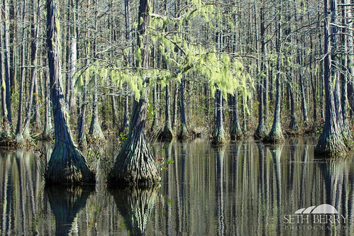 statepark trees lake reflection green sc moss pond camden southcarolina adventure kayaking paddling goodale goodalestatepark sethberryphotography