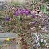 Spring flowers #seenonmyrun