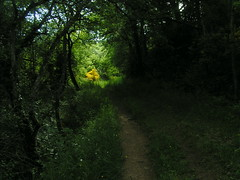 20080514 22703 0904 Jakobus Weg Wald Stein Ginster gelb