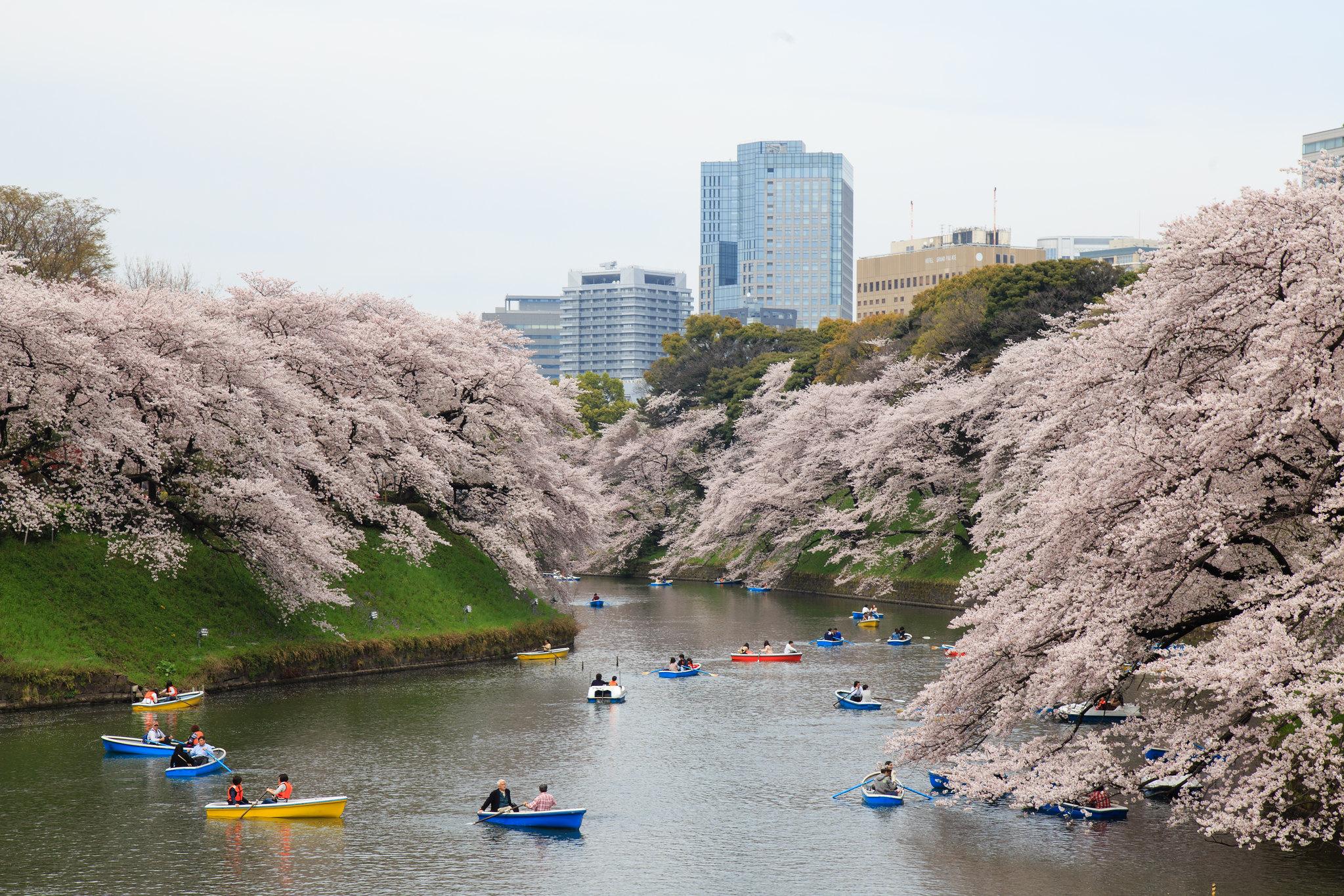2016-04-04 桜 001