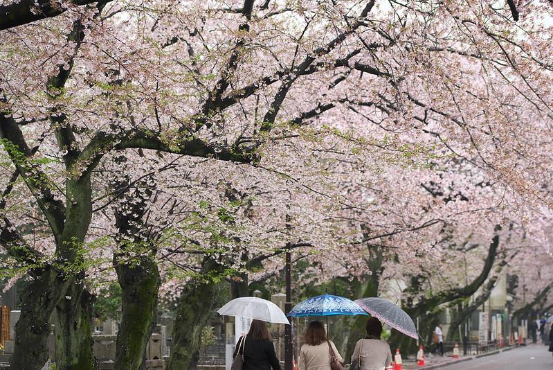東京路地裏散歩 雨の谷中散策 2016年4月7日