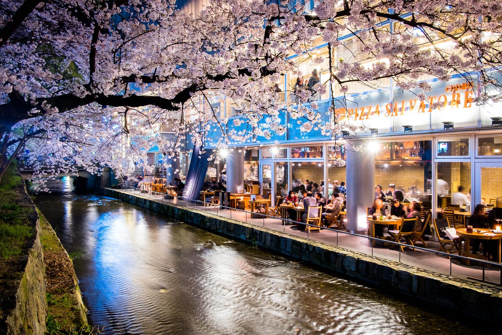 sakura '16 - cherry blossoms #12 (Kiyamachi, Kyoto)