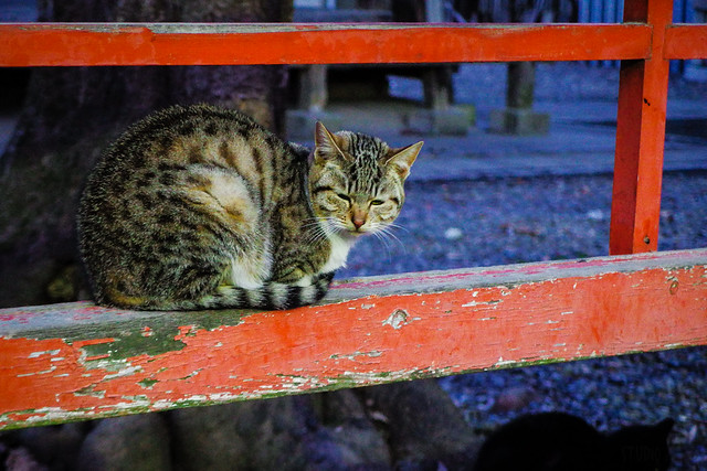 Today's Cat@2016-02-02