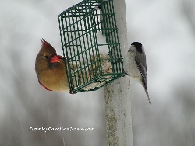 January Snow birds 24