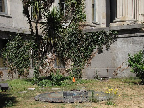 Old San Francisco Mint lawn before