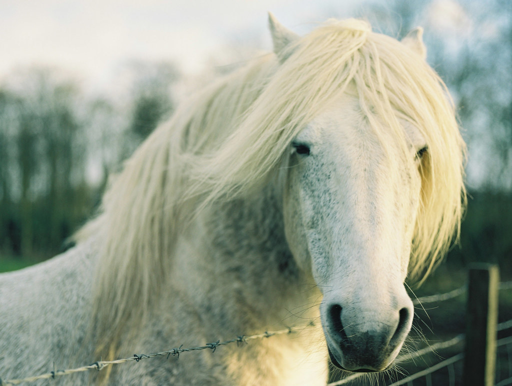 Beautiful Wallpaper Horse Wolf - 24704943786_e73727390f_b  You Should Have_166893.jpg