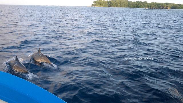 イルカでも出たらなぁと探してたら、沖で発見!道中寝ずに探してた甲斐がありました!