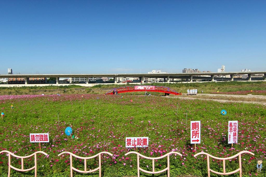 大里橋花海 (8)