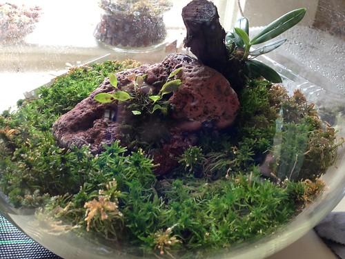 Glass globe terrarium, 2.27.16