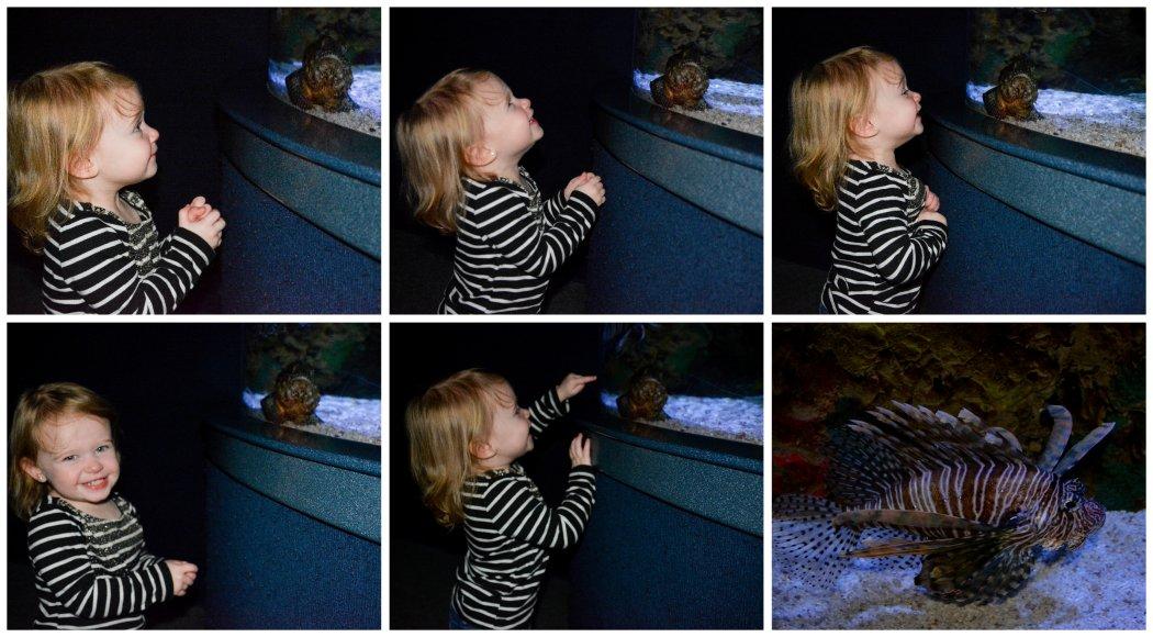 loving the lion fish