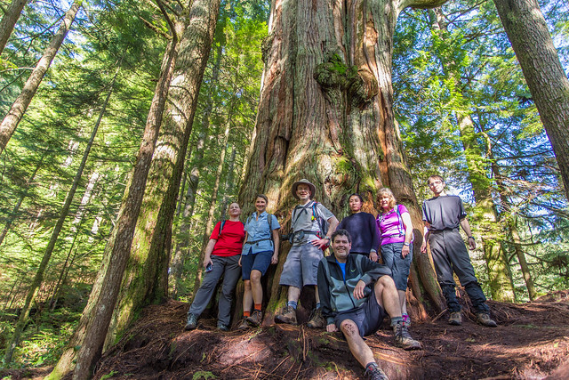 Group at the big cedar tree