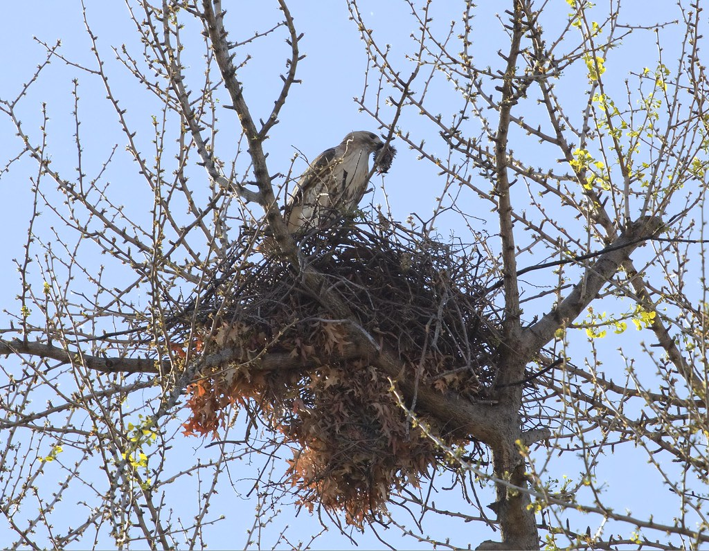 Christo clears food from the nest
