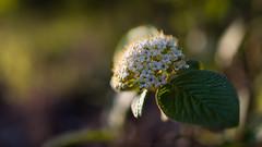 Spring f/1.8