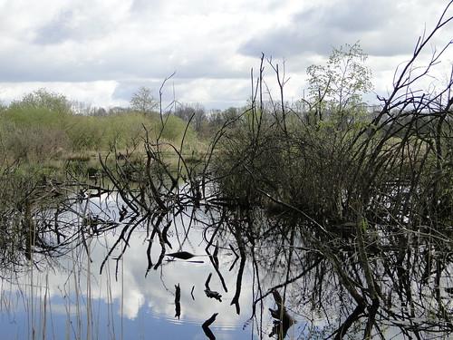 Nature of Goorke near Arendonk