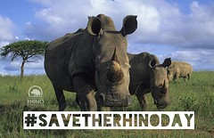 #SaveTheRhinoDay - Today, only 29,000 rhinos survive in the wild. Four of the five rhino species are threatened. Three are critically endangered. #TeamRhino