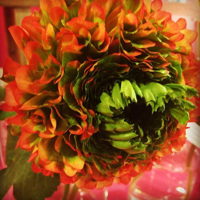 Photo:ラナンキュラス フローラ at.flower By kanonn
