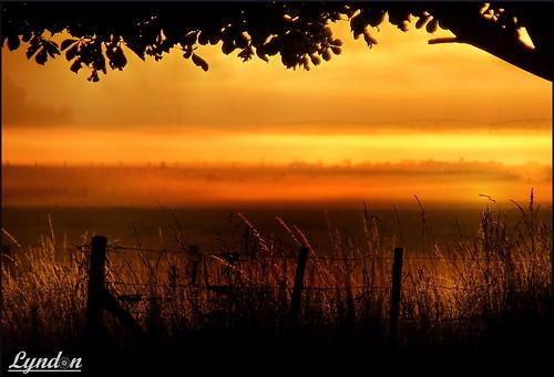 newzealand nature sunrise landscape farm farming nz wairarapa greytown 2016 week1theme week12016 52weeksthe2016edition weekstartingfridayjanuary12016