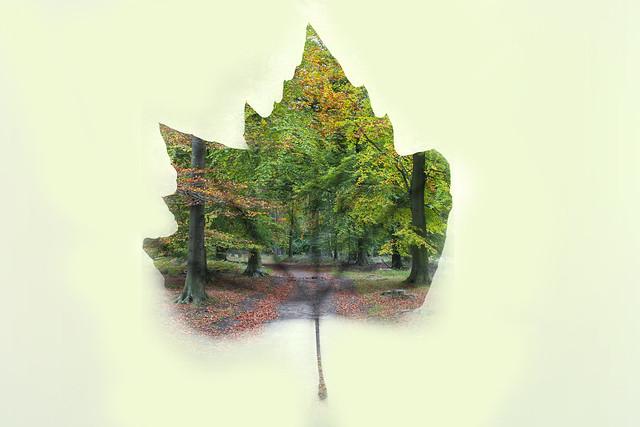 Leaf forest autumn double exposure