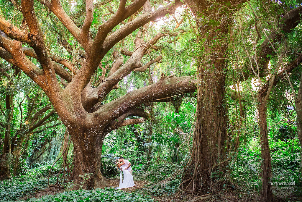 Enchanted Forest Photos - Maui