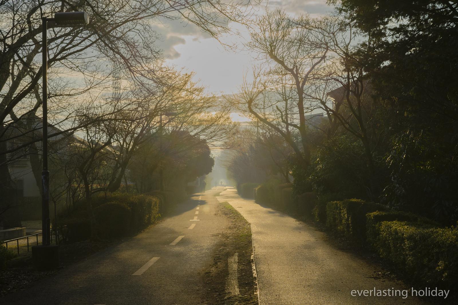 朝もやの自転車道