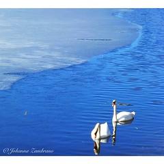 denmark #danmark #dinamarca #danimarca #hillerød #swans...