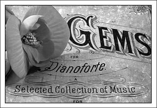 Begonia On Pianoforte