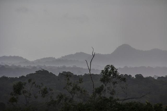 Savane Roche Virginie, vue sur le mont Tortue