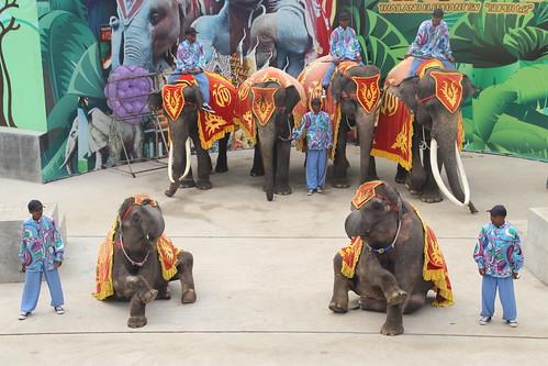 Elephant carers with bullhooks, Dalian Forest Zoo, China June 2014
