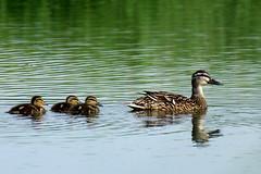 Birds of Denmark