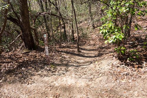 Palmetto Trail - Jocasee Gorges - 5