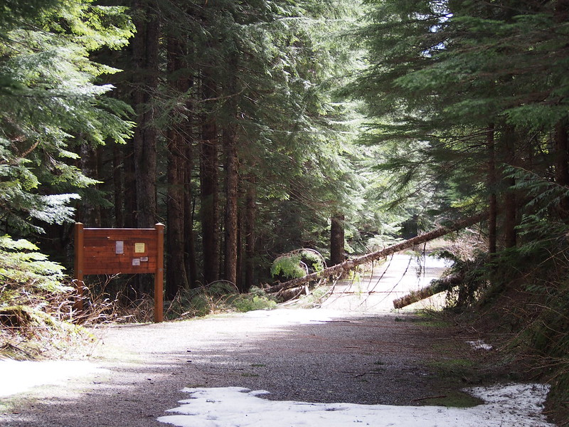 Monte Cristo Trailhead: There are fallen trees over the trail.