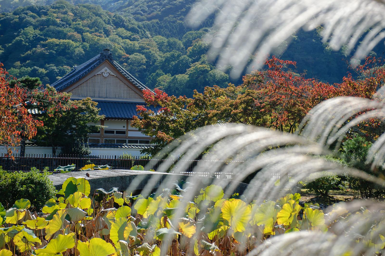 2015VQ@Kyoto-364