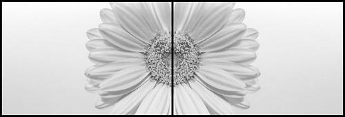 Blume im Spiegel.jpg