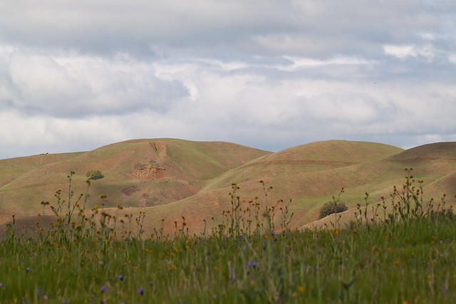 Spring Hills, Spring Flowers