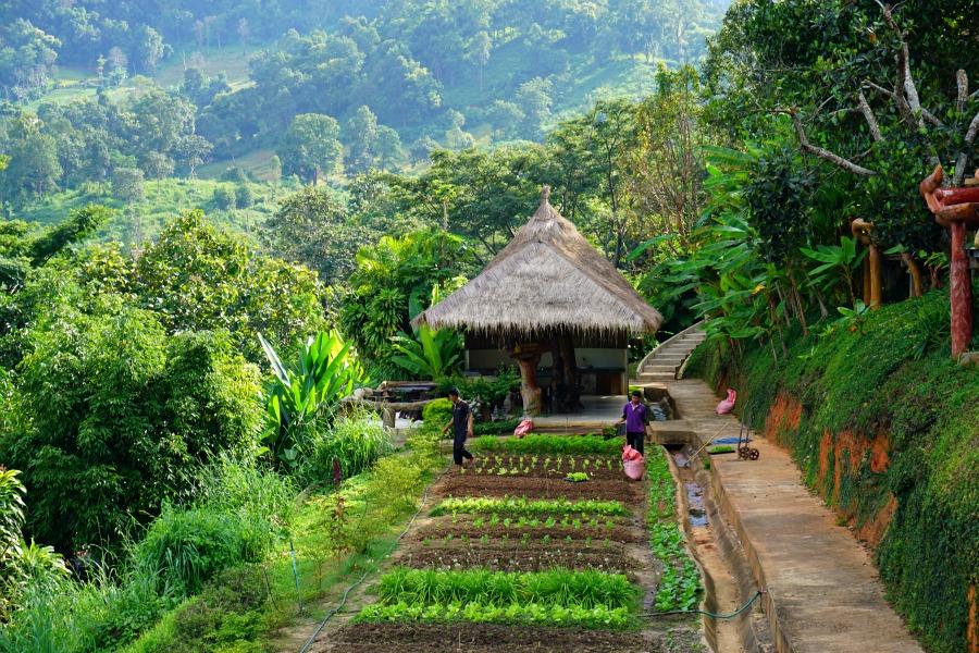 Chiang Mai Organic Garden