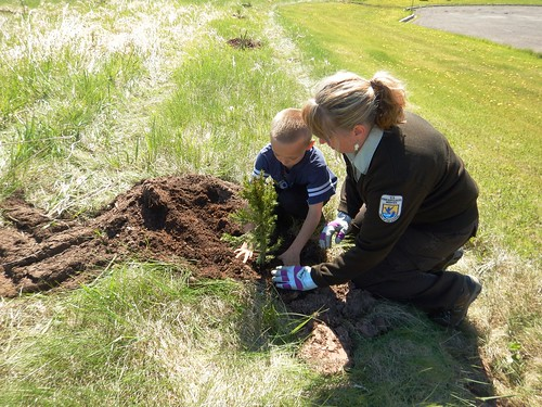 Hatchery staff assist with planting trees that will be beneficial windbreaks in years to come
